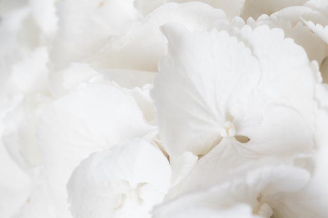 美白ケアの色は白