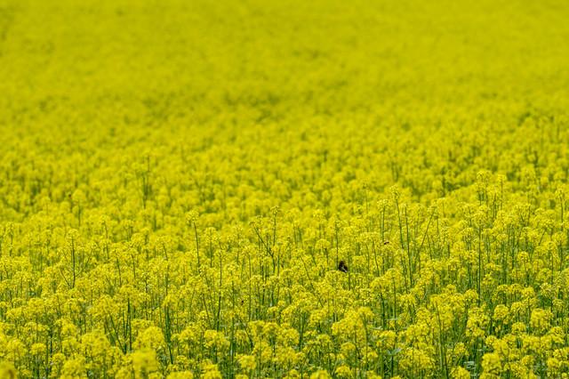 しわ対策には黄色