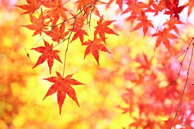 紅葉と美容