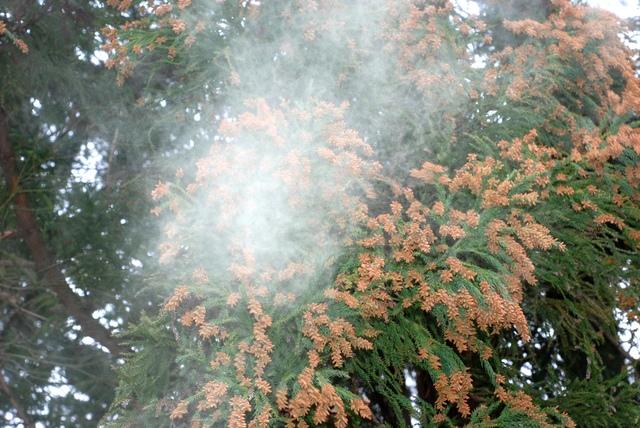 花粉と美肌