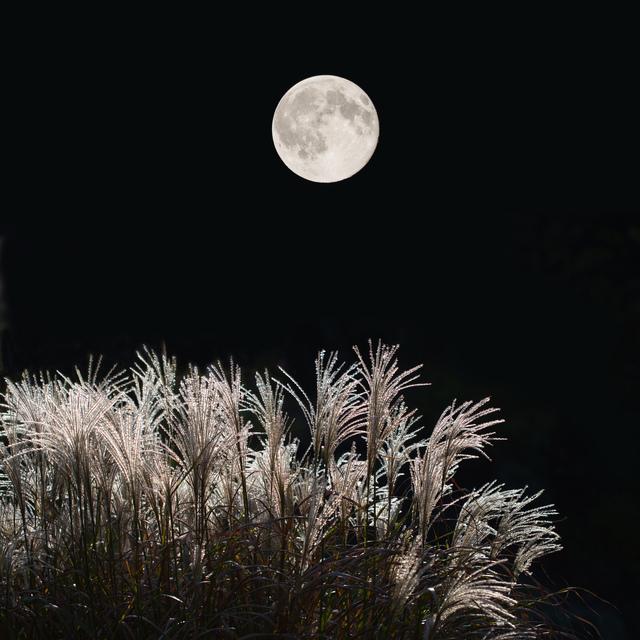 月見で美容