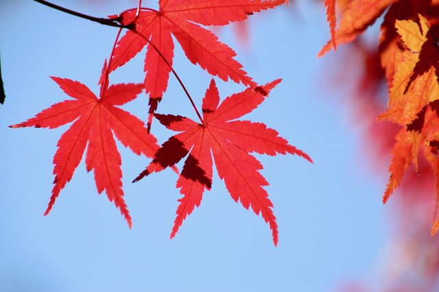 美容と紅葉