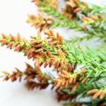 これからの季節はスギ花粉注意報!肌を保護する対策法とは