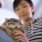 猫との信頼関係を深めて美しく!ペットから得られる美容効果