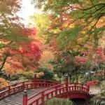 紅葉を眺めながらウォーキングを!ウォーキングの正しい歩き方を紹介